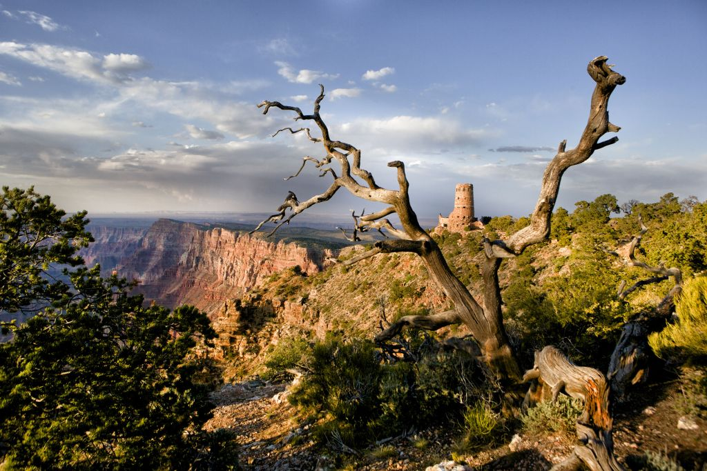 SR Watchtower with Dead Tree and Canyon