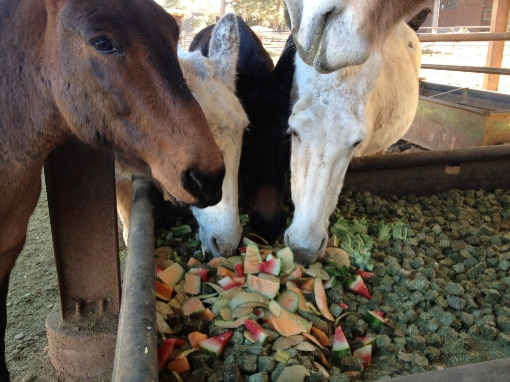 Mules Apples