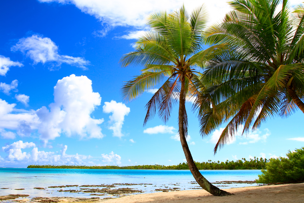 Palm trees on the beach under a blue sky.